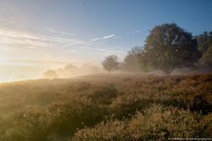 The fog sets